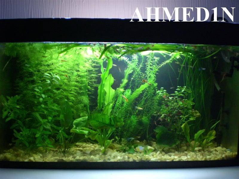 Some pictures from my aquariums CIMG2492