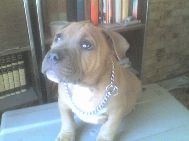 Introducing Lex Luthor 12-30-08_0813