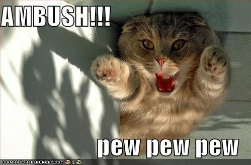 Caturday! Funny-pictures-ambush-cat