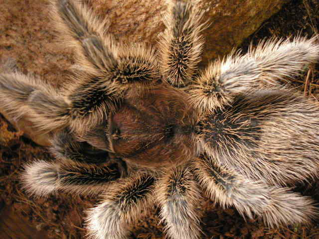 Your Tarantula and Spider pix.... - Page 3 Picture071