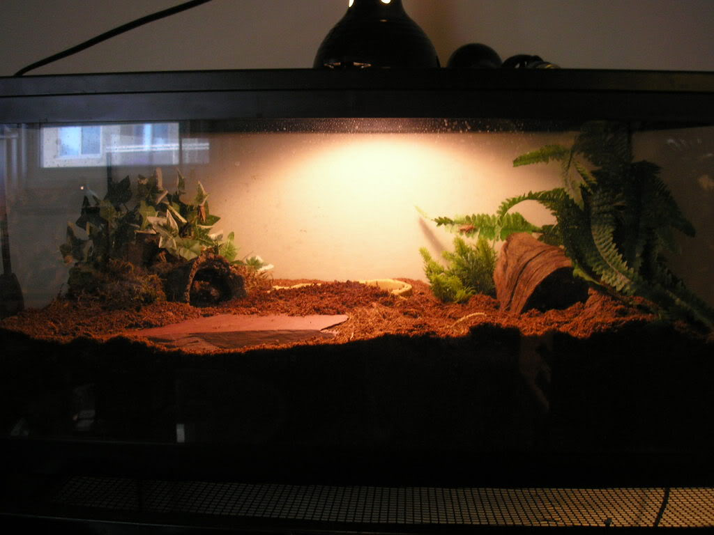[Sharing] Show Off Your Enclosures Picture8759