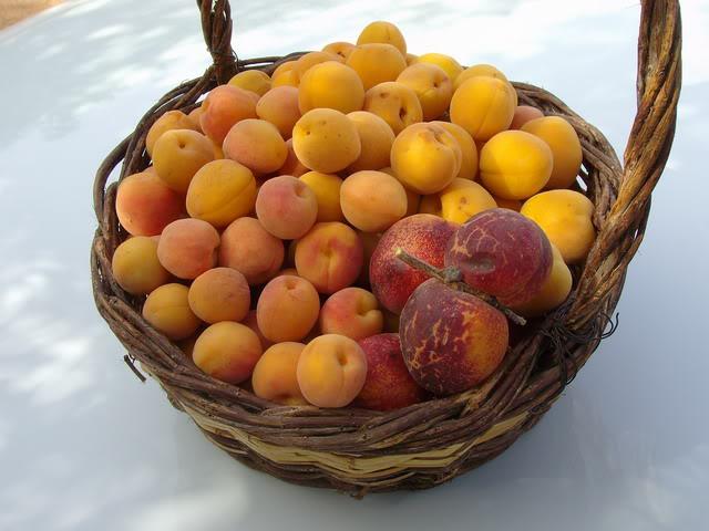مربى المشمش Apricotbasket
