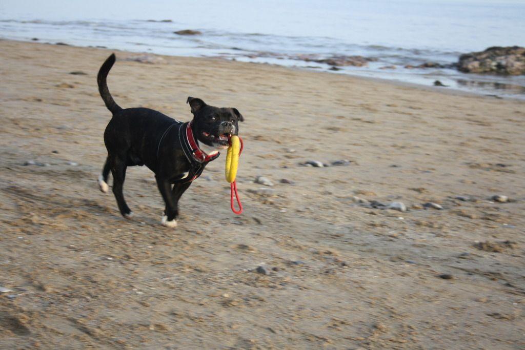 Harley down the beach IMG_4800_zpsvgs3cwwz