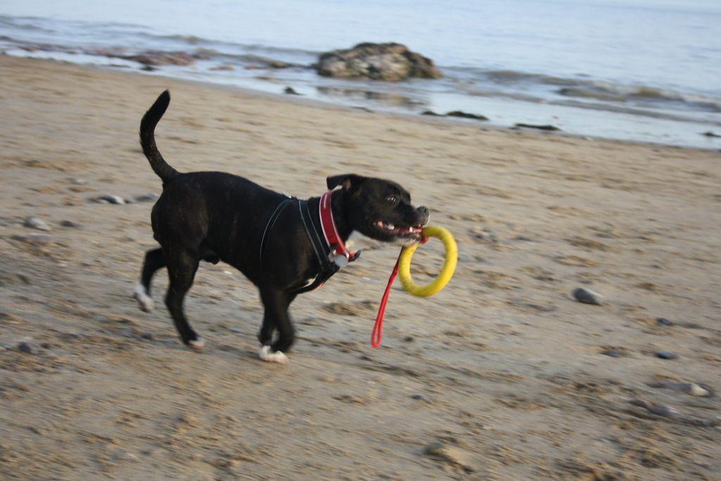 Harley down the beach IMG_4801_zpsysjo2nve