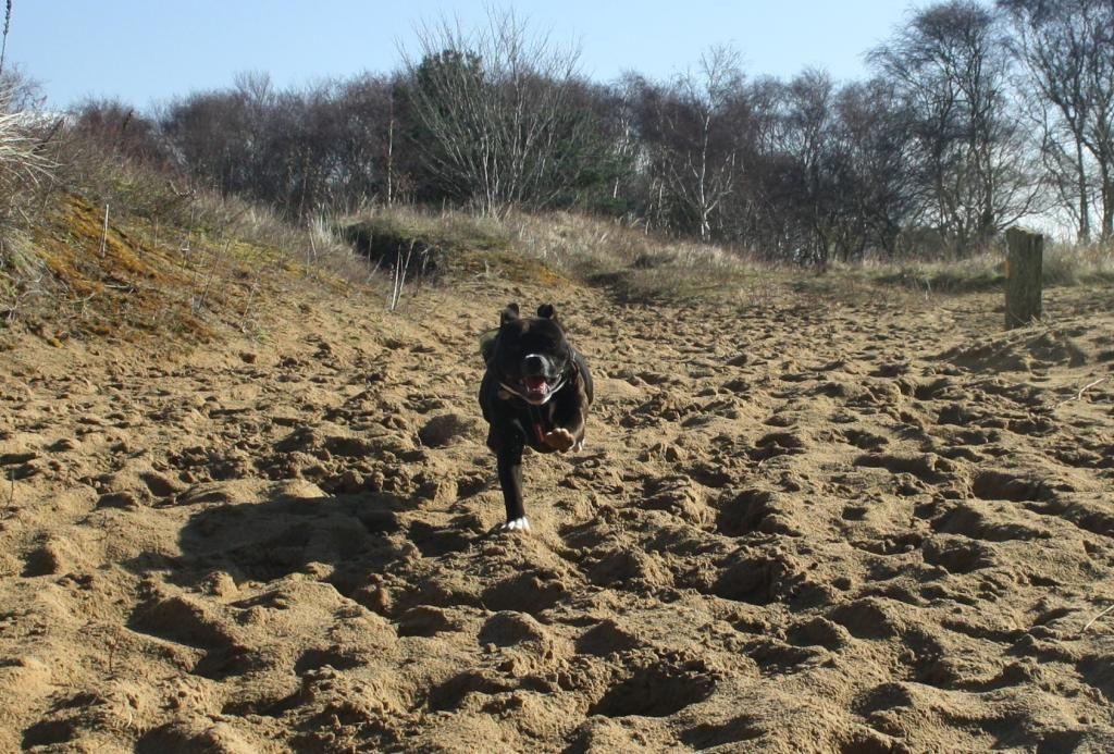 Nice walk down the sand dunes Running_zpsatenwy5a