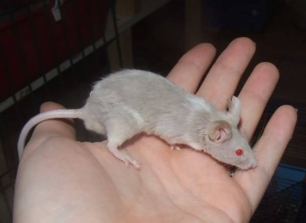 Lots of mice needing homes - Surrey 210309brains