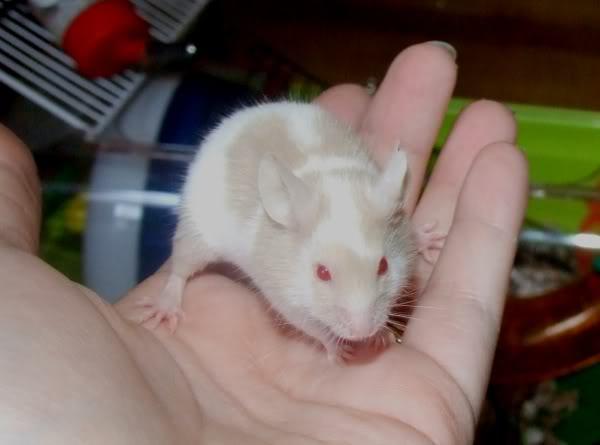 Lots of mice needing homes - Surrey 210309harley