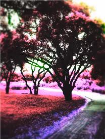 Trees 102_4885-1