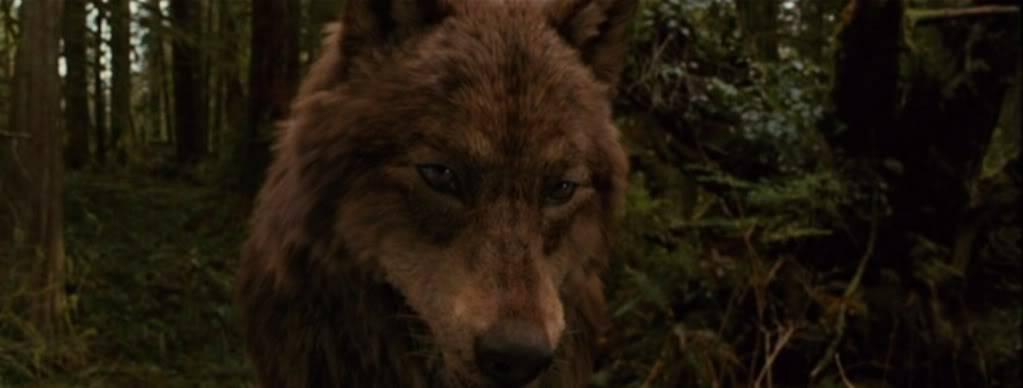 Darius Alkaev (Werewolf) 5