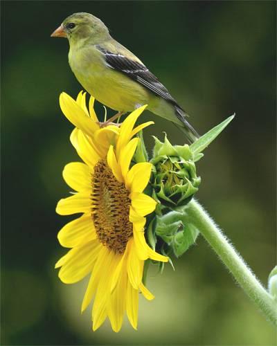 கவலை மறக்கும் காட்சிகள் அழகிய பறவைகள் சில.. Bird
