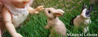 Concours de bannières n.23 Petites Bêtes groupe2 EN VOTE!! Banniere1