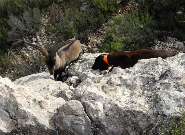 De machos en Teruel IMGP0296web