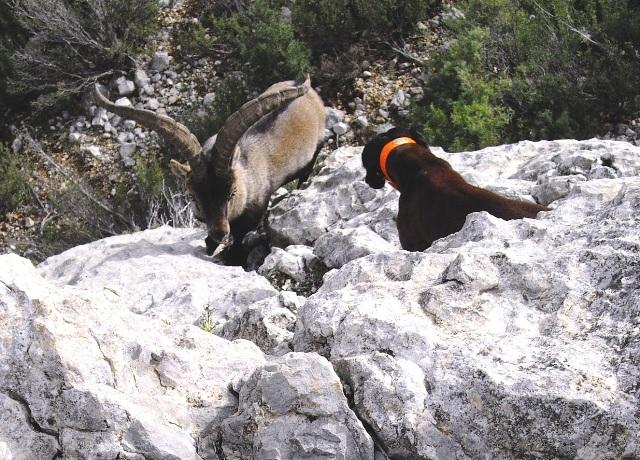 De machos en Teruel IMGP0297web