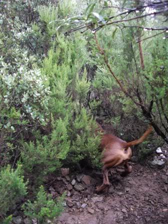 Una cochina enfadada IMGP1322web