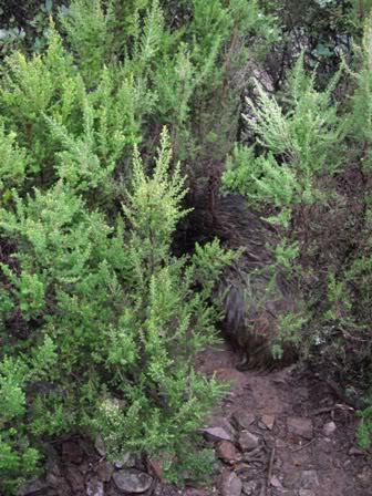 Una cochina enfadada IMGP1326web