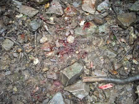 Una cochina enfadada IMGP1331web