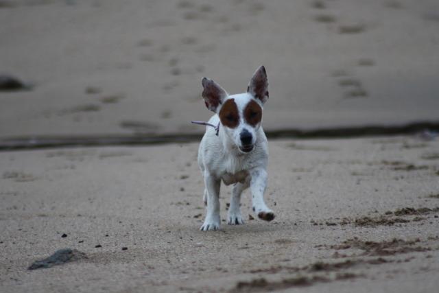 Disfrutando de los perros en la playa IMG_5497