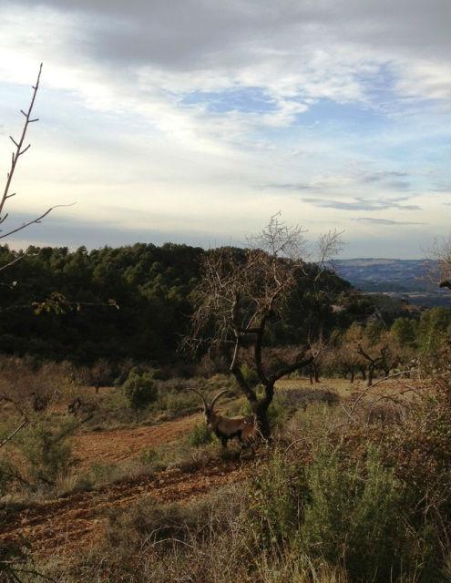 De machos en Teruel Macho