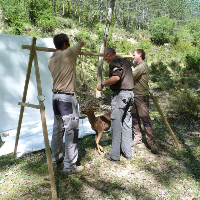 Seminario de AEPES en Huesca - Reservas de Caza P1000250