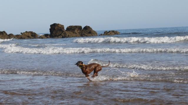 Disfrutando de los perros en la playa S-1