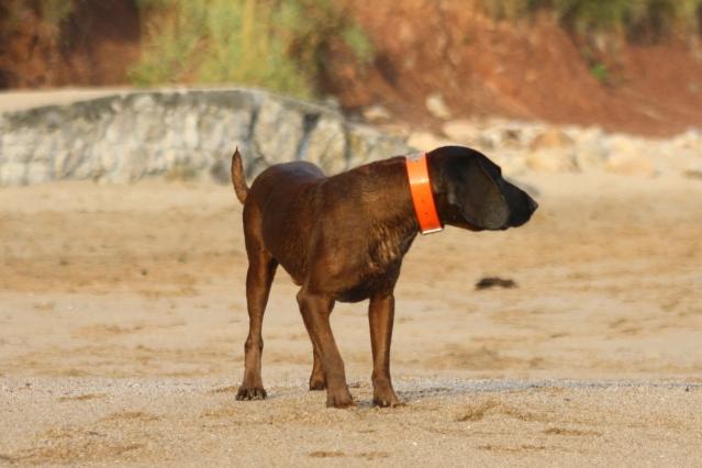 Disfrutando de los perros en la playa S-10