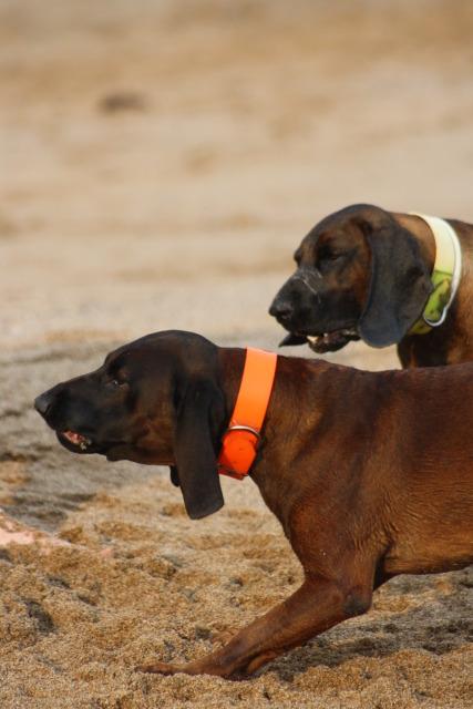 Disfrutando de los perros en la playa S-12
