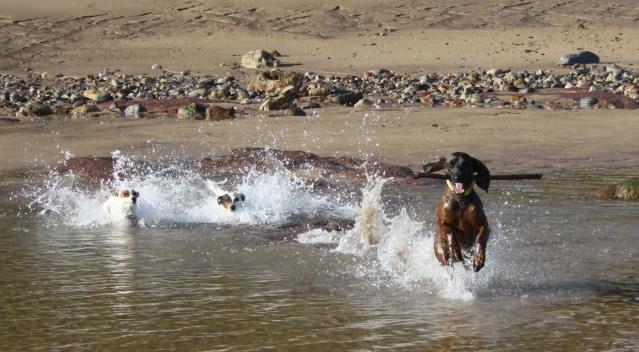 Disfrutando de los perros en la playa S-2