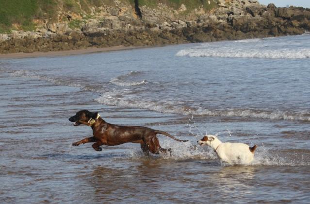 Disfrutando de los perros en la playa S-3
