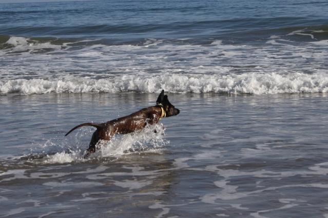 Disfrutando de los perros en la playa S-4