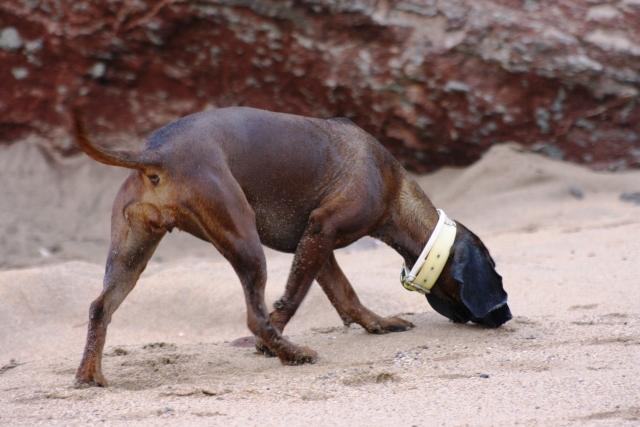 Disfrutando de los perros en la playa S-6