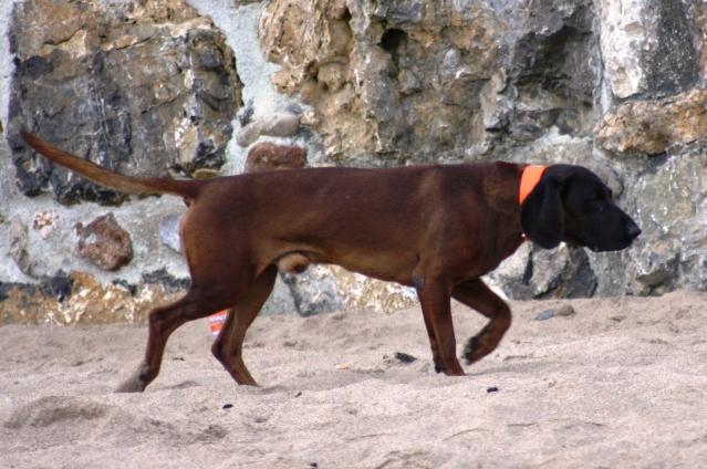 Disfrutando de los perros en la playa S-8