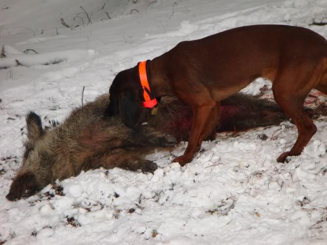 III Curso Básico de Rastreo con Perros de Sangre Umma2peq