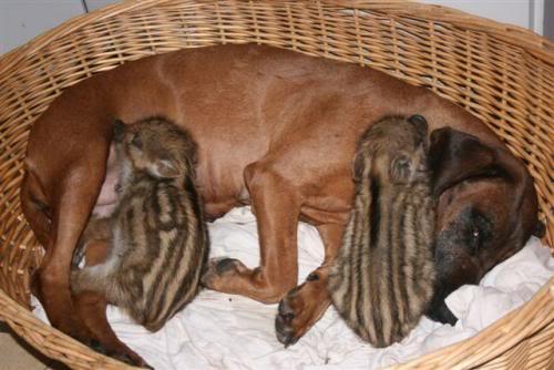 ¡Pero mira que el BGS es un perro completo! Murkel059