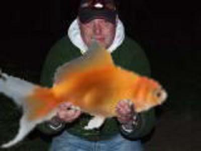 57lb British Record Pike - Page 2 Woodiesgoldfish