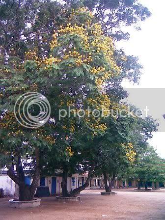 Trường RK hoa nở 4 mùa Hinh1