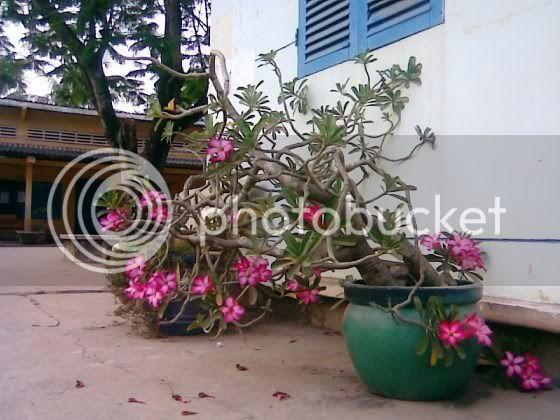 Trường RK hoa nở 4 mùa Hnh