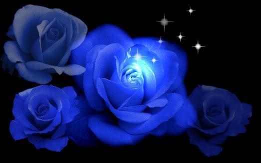 Documentos y acontecimientos Blue_roses