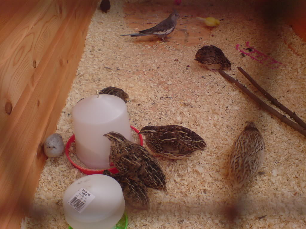 Aviary Mix2