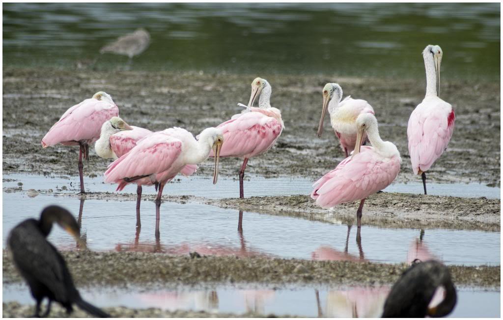 Oiseaux de la Floride IMGP0665_zpsab64147a