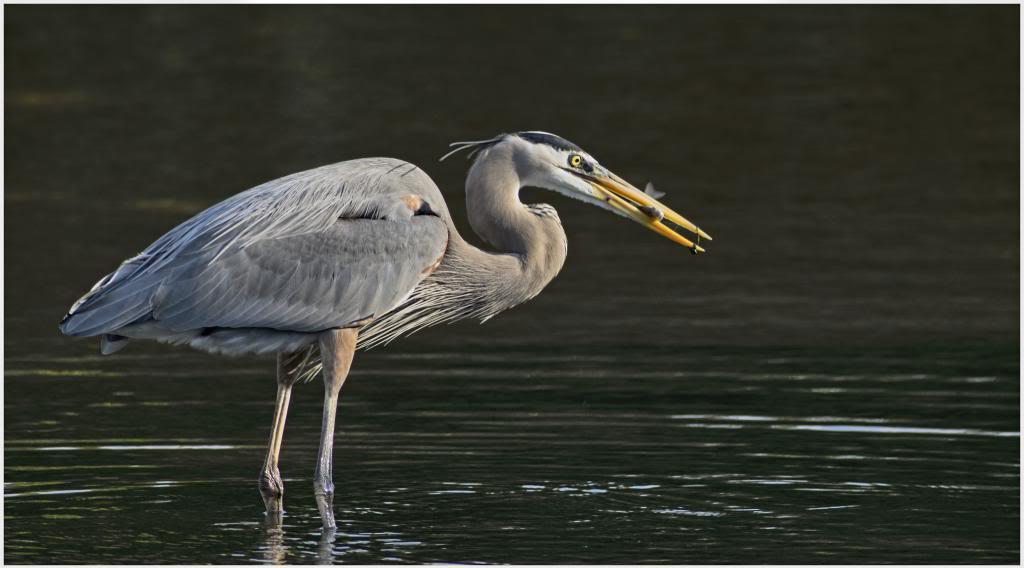 Oiseaux de la Floride IMGP1243_zps1857a0a2