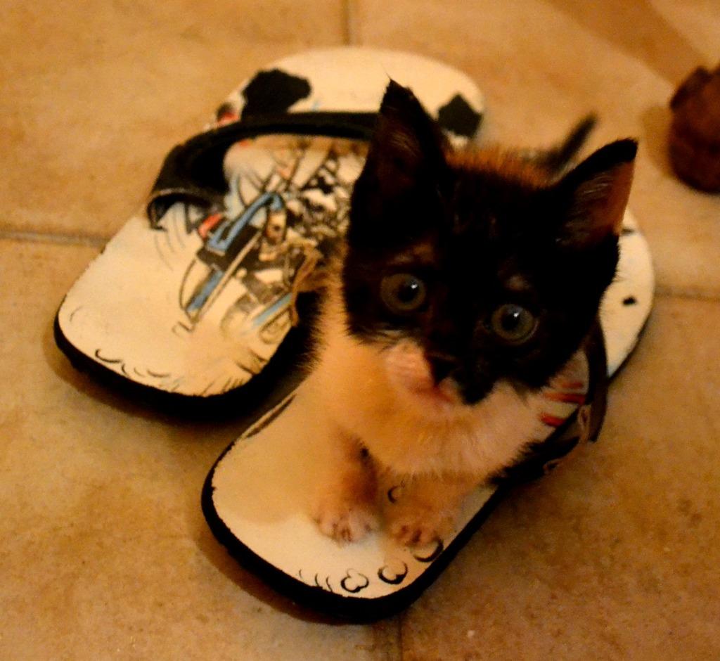 SOS για 3 μικρά γατάκια!!! SOS SOS SOS - Σελίδα 5 DSC_0004_zpsduwgspmq
