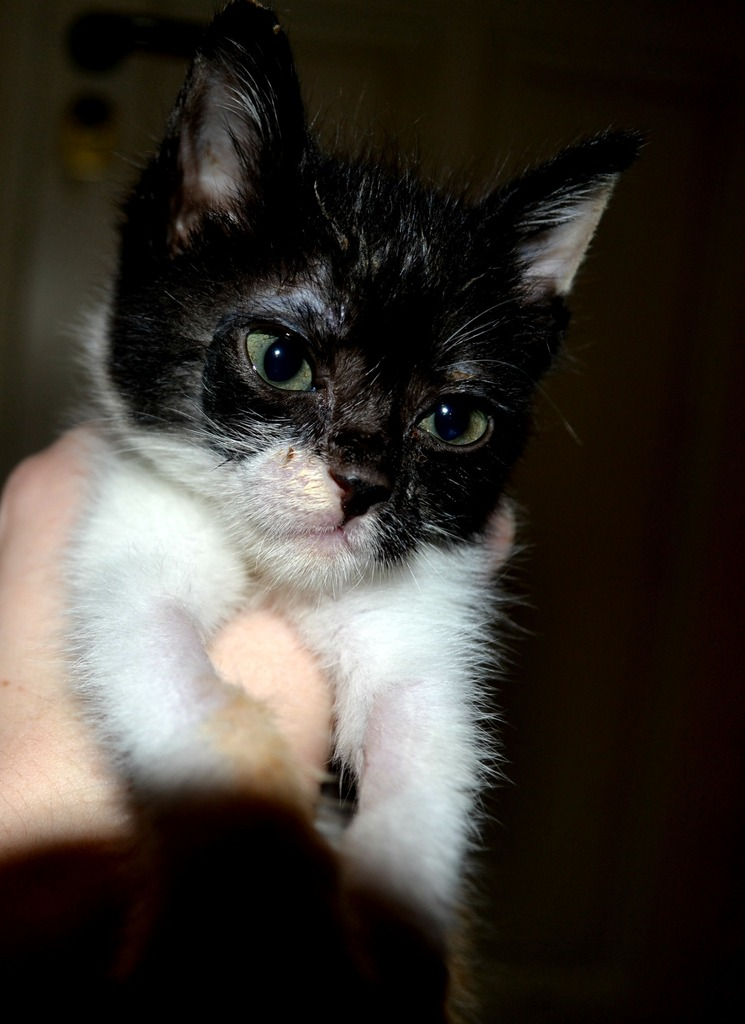 SOS για 3 μικρά γατάκια!!! SOS SOS SOS - Σελίδα 5 DSC_0006_zpscihygfk5