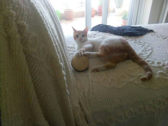 Κόναν ο γάταρος σε αναζήτηση γατοοικογένειας!!! Υιοθετήθηκε!!! - Σελίδα 3 11948048_1011489385550129_1188551614_n_zpsqybde52l