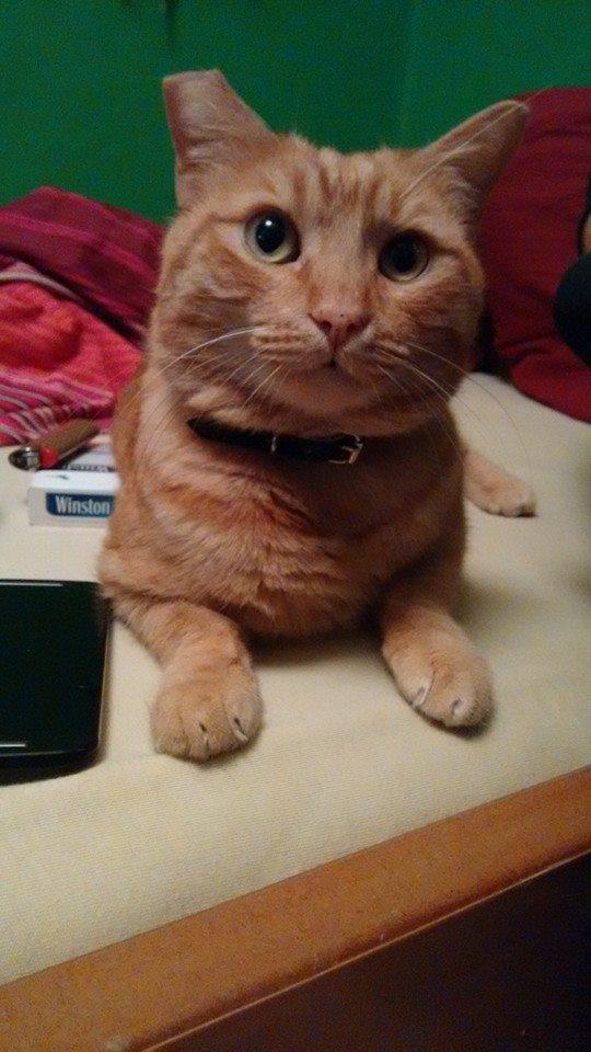 Mushu- ένας γάτος που τα έχει όλα*και πάνω από όλα θέληση!!! Υιοθετήθηκε!! 10801728_795307410542969_2105222874510378104_n_zpsha8aa4ry