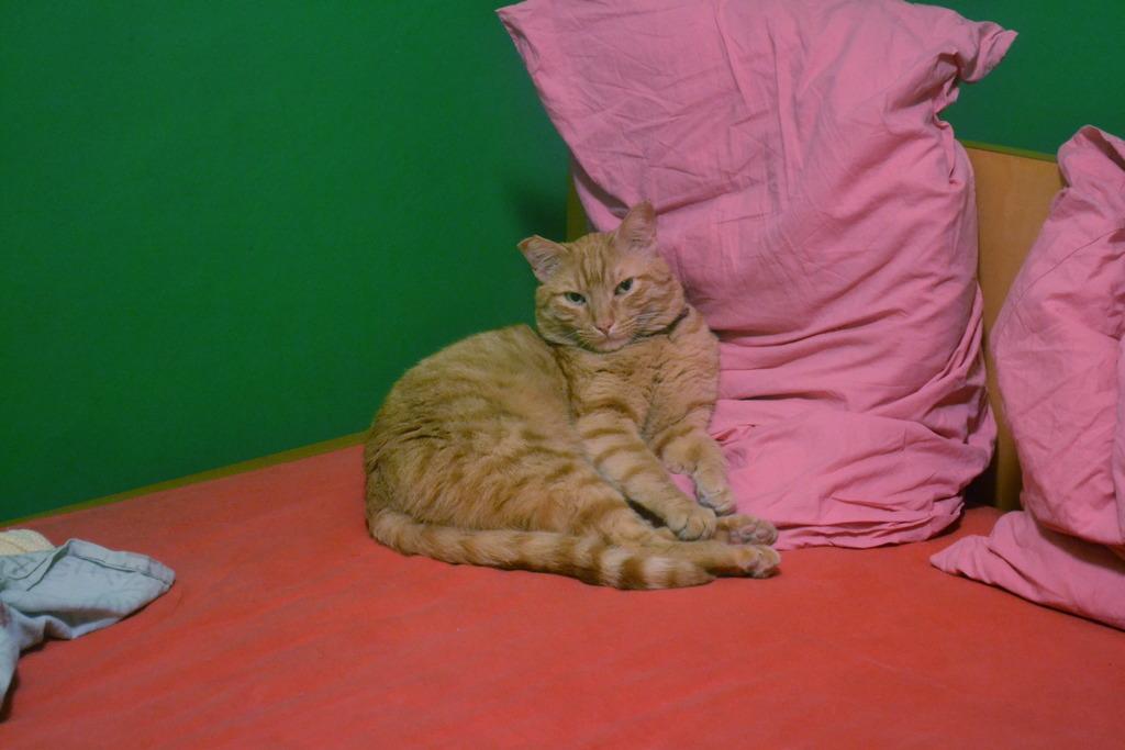 Mushu- ένας γάτος που τα έχει όλα*και πάνω από όλα θέληση!!! Υιοθετήθηκε!! CSC_0008_zpsdvli2lyt