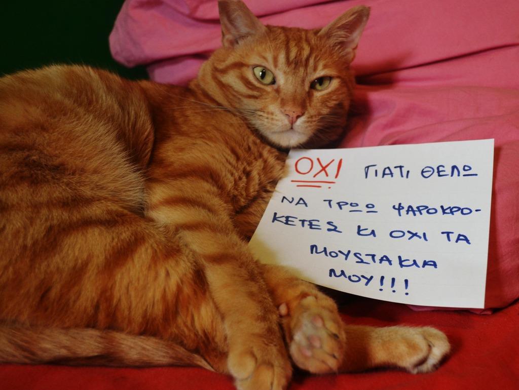 Mushu- ένας γάτος που τα έχει όλα*και πάνω από όλα θέληση!!! Υιοθετήθηκε!! DSC_0005_zpsfkflekj6