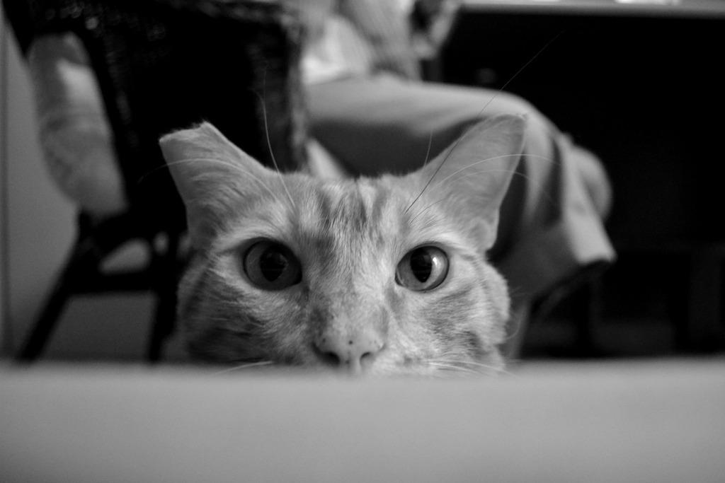 Mushu- ένας γάτος που τα έχει όλα*και πάνω από όλα θέληση!!! Υιοθετήθηκε!! - Σελίδα 2 DSC_0015_zpsjswdzn1u
