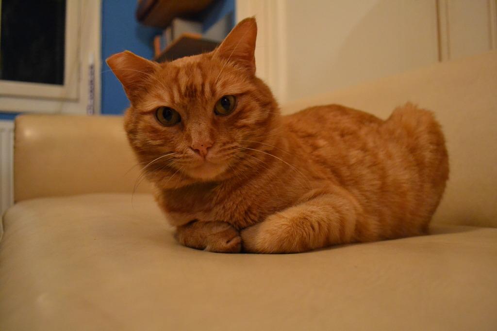 Mushu- ένας γάτος που τα έχει όλα*και πάνω από όλα θέληση!!! Υιοθετήθηκε!! DSC_0039_zpshez6hlx7