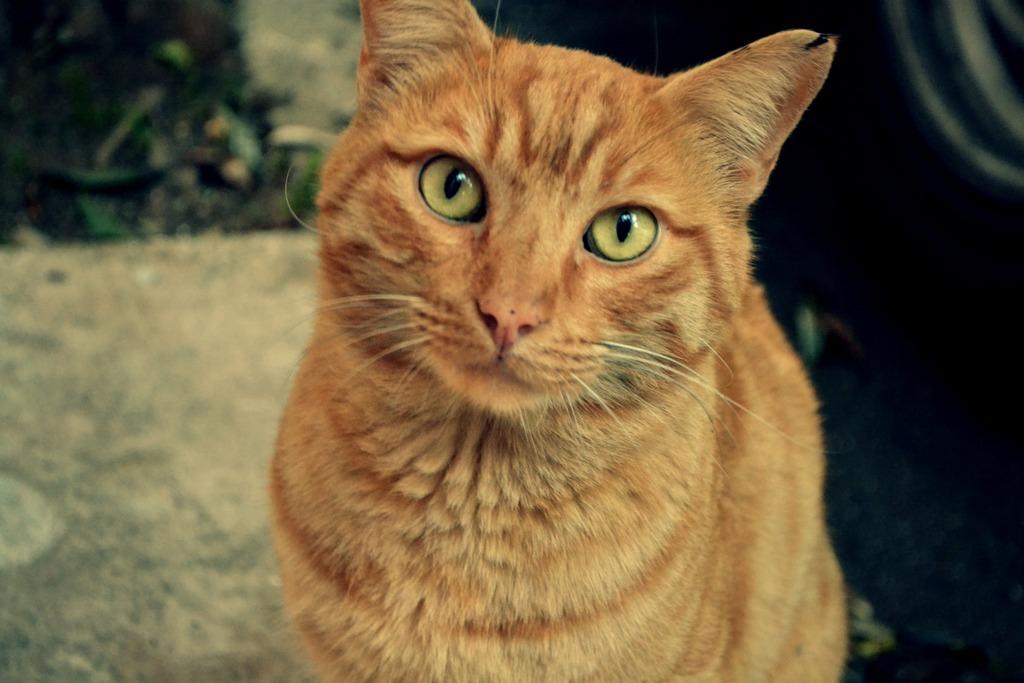 Mushu- ένας γάτος που τα έχει όλα*και πάνω από όλα θέληση!!! Υιοθετήθηκε!! DSC_0204_zpsi37kcqvg