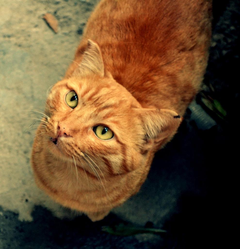 Mushu- ένας γάτος που τα έχει όλα*και πάνω από όλα θέληση!!! Υιοθετήθηκε!! DSC_0209_zpsmahar1sv